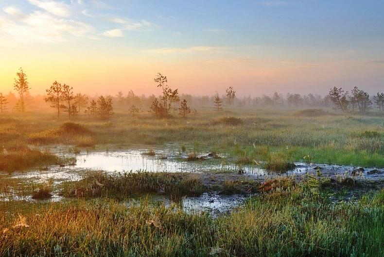 Всемирный день водно-болотных угодий 2 февраля 2018 года проходит под  девизом «Водно-болотные угодья для устойчивого будущего городов»   Новости    Министерство природных ресурсов и охраны окружающей среды Республики  Беларусь