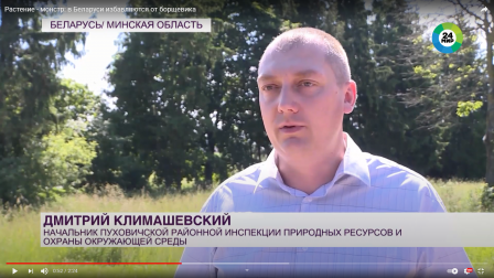 Растение-монстр: в Беларуси избавляются от борщевика