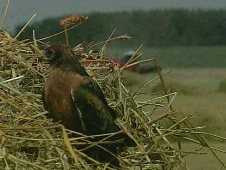 Как убрать урожай, чтобы сохранить жизнь зверей и птиц